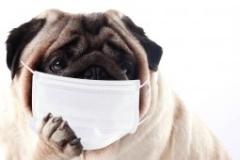 インフルエンザに罹るtop