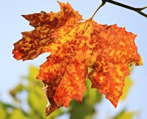 autumn-1638473_1920