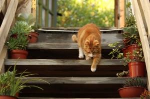 cat-1846356_1280