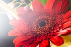 flowerっっっl