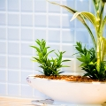 観葉植物11