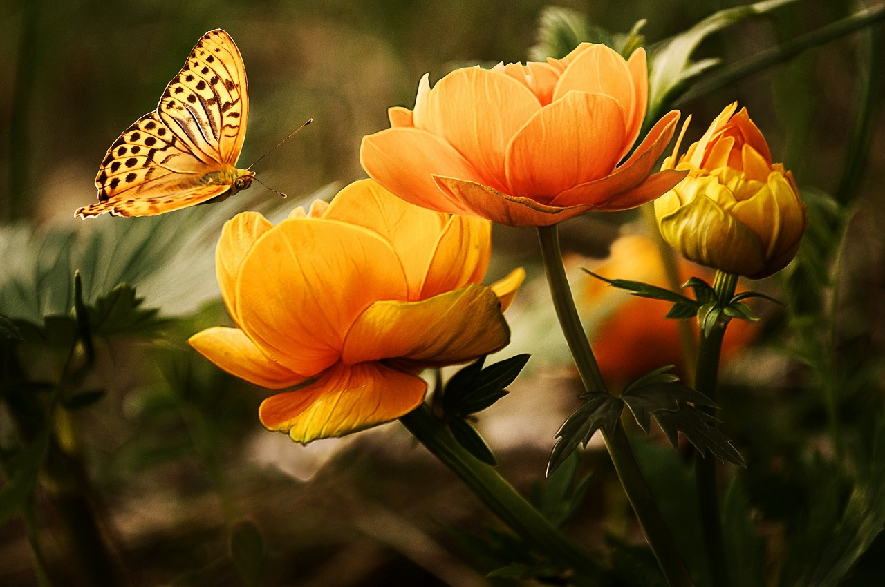 flowers-19830_1280-1