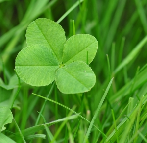 four-leaf-clover-711625_1280
