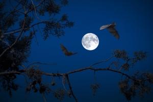 full-moon-3659317_1920