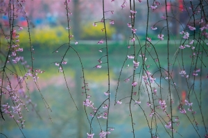 spring-1256810_1920