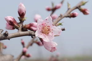 spring-804533_1920
